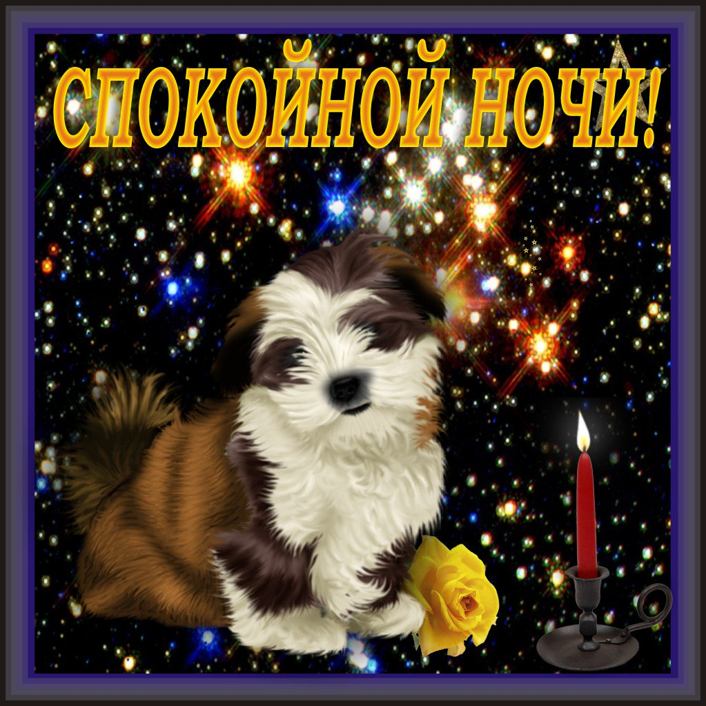 Месяцами, открытки сладких снов с собачками