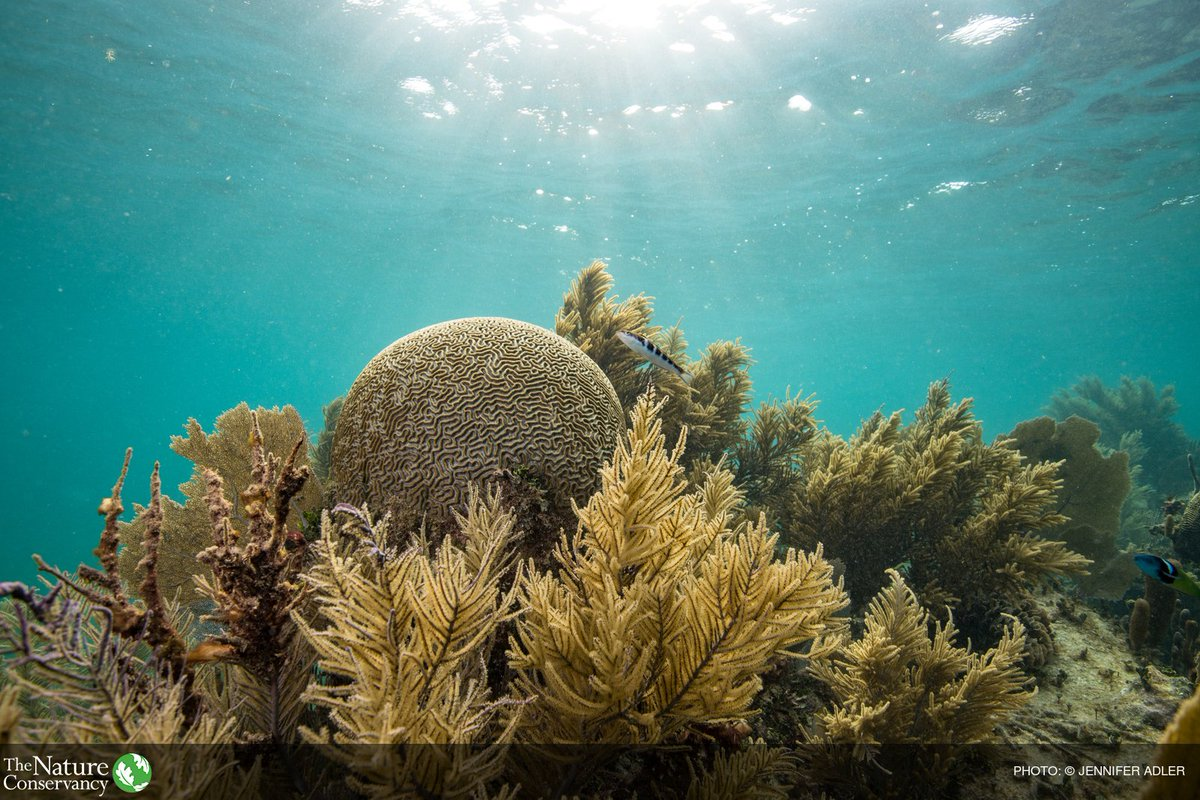 An international team of scientists is mastering the art and science of raising coral babies.  Great story complete w/ video & photo:  ()https://t.co/fPwAQxqQgh@bioGraphic