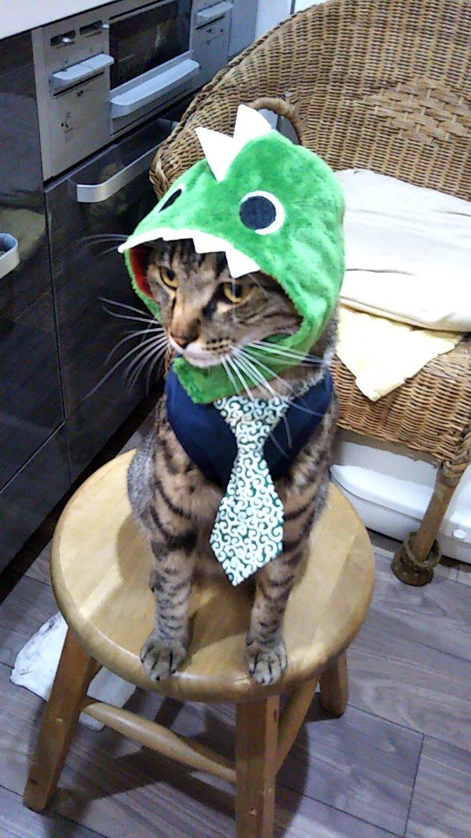 test ツイッターメディア - ダイソーでコーデしました トータル400円です(笑)  #ダイソー #ペット用品 #猫のいる暮らし  #猫動画 https://t.co/37vrqyL0C3