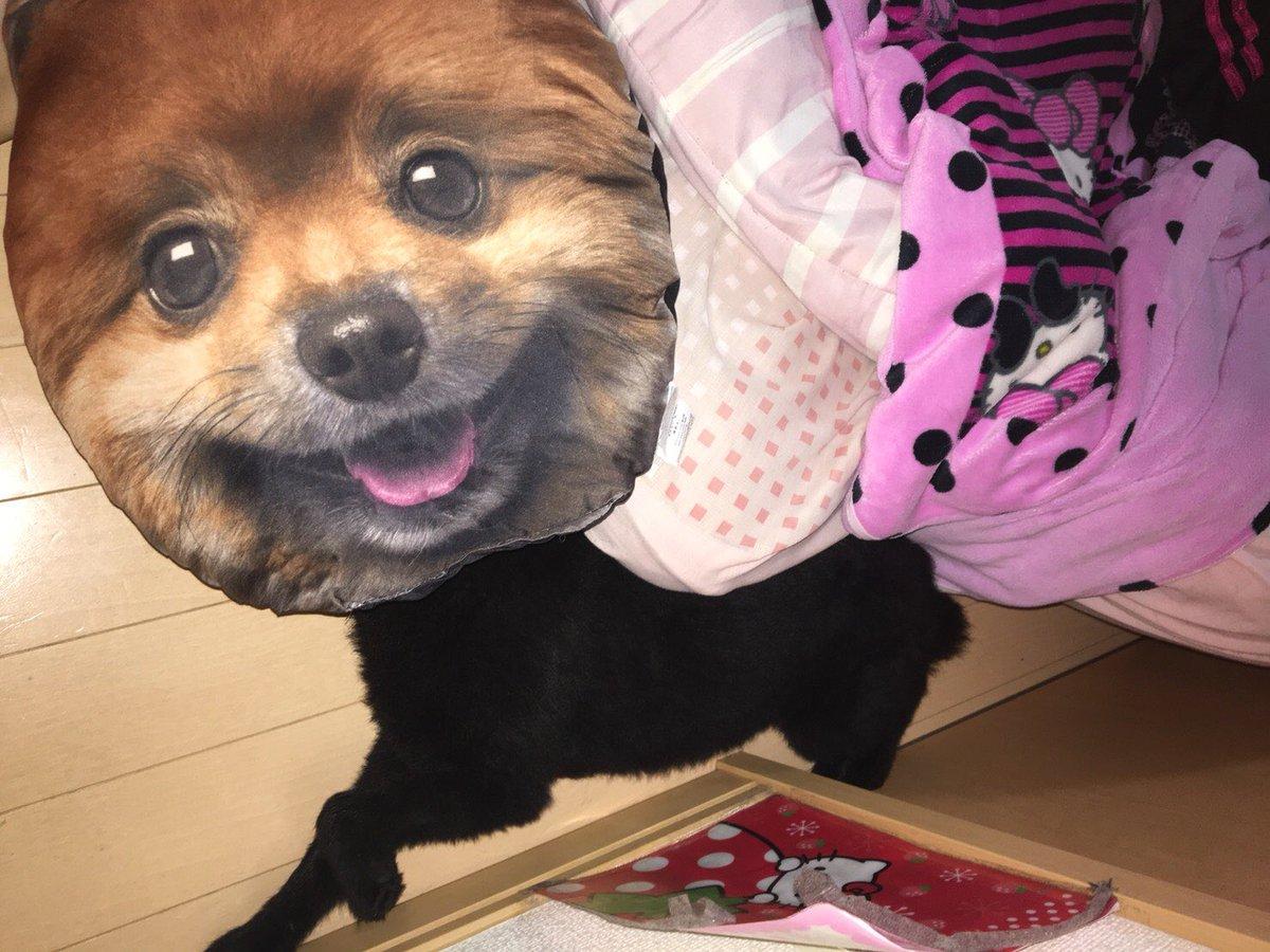 test ツイッターメディア - 爆笑 顔、デカくなっちゃった~www  #ポメラニアン #爆笑 #犬 #動物 #DAISO #ラブ # https://t.co/X7XotNbK8T