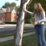 Image for the Tweet beginning: Protecting our trees for the