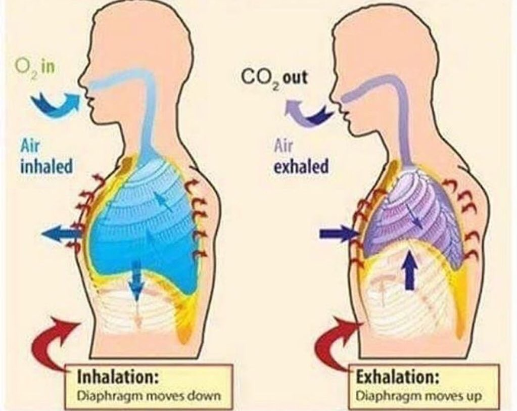 Charlie Chariieberrow Twitter Profile Twipu Inhalation Exhalation Diagram Of Diaphragm Lmaooooooo Like And Retweet If Youve Done This