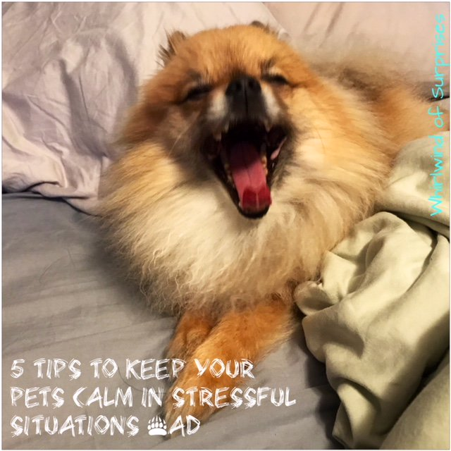 Tips to calm pets