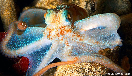 Petition: Protect Octopuses from Ocean Plastics https://t.co/Aac0NPA4GD https://t.co/msCOQsogK2