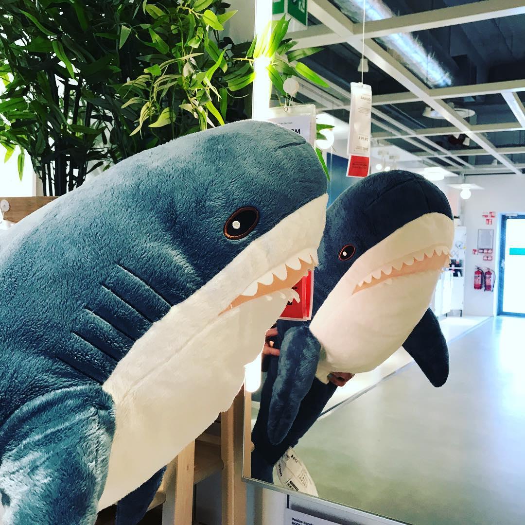 Картинки с акулой из икеа, днем рождения мужчине