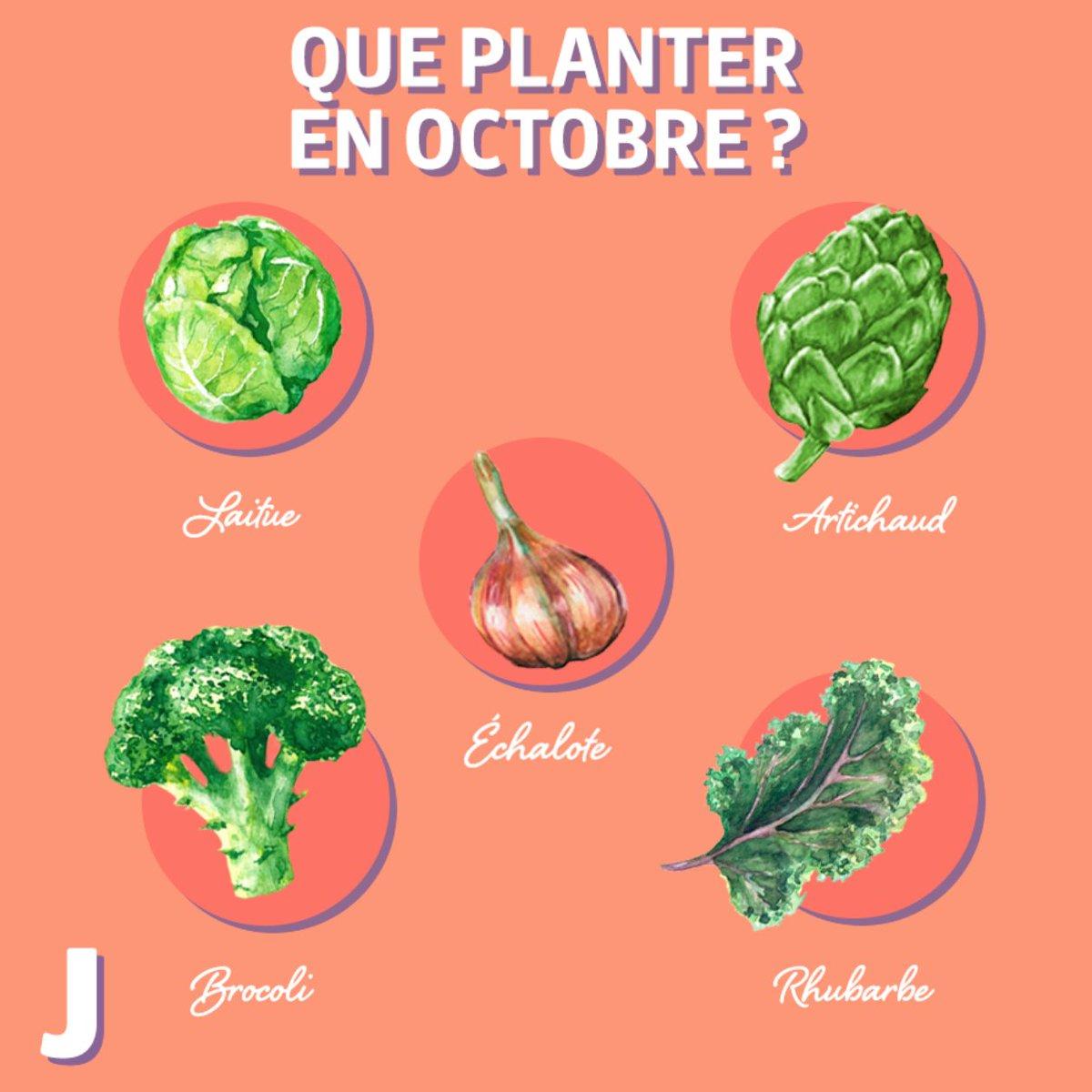 Quoi Planter En Octobre jardicalendrier hashtag on twitter