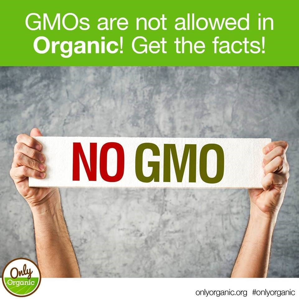 October is non-GMO month! And here's the good news, if you want to avoid GMOs, choose organic. GMOs are not allowed in organic food production! Got questions? Go here: http://www.onlyorganic.org/get-facts/faq