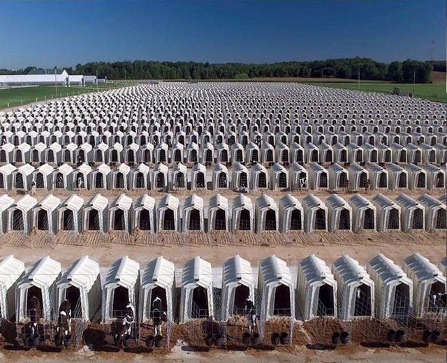 Pls RT 💔 Immediately stolen from their frantic mothers, this is where BABY CALVES live their very short lives in complete MISERY until VICIOUSLY KILLED + sold as VEAL ! Dairy-meat industry CRUELTY! #AnimalRights #Anipals #GoVegan #Vegans VOTE #YesOn12 TY https://t.co/Z2CYc2sCaW