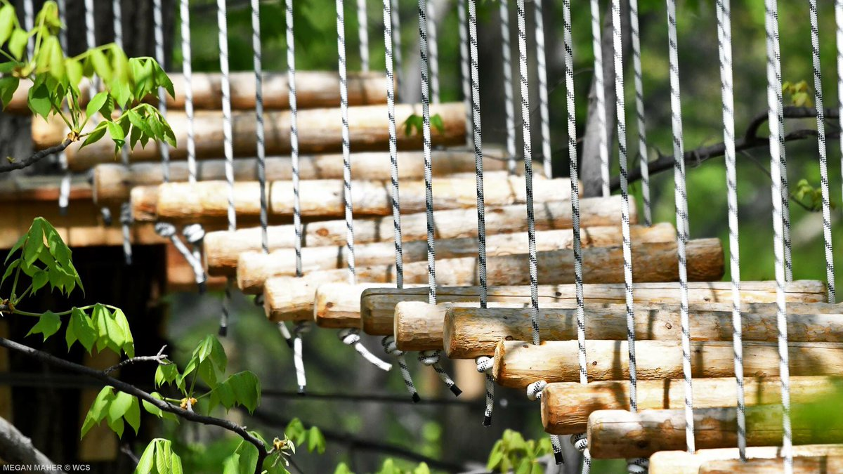 Bronx Zoo Treetop Adventure On Twitter Our Hours Have Changed