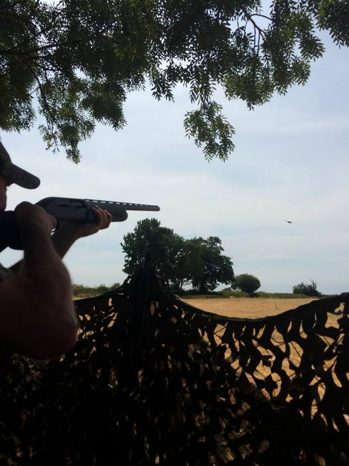Remington 1100 doing the business. @RaytradeUK  @remingtonarmsco  #Remington1100 #PigeonShooting