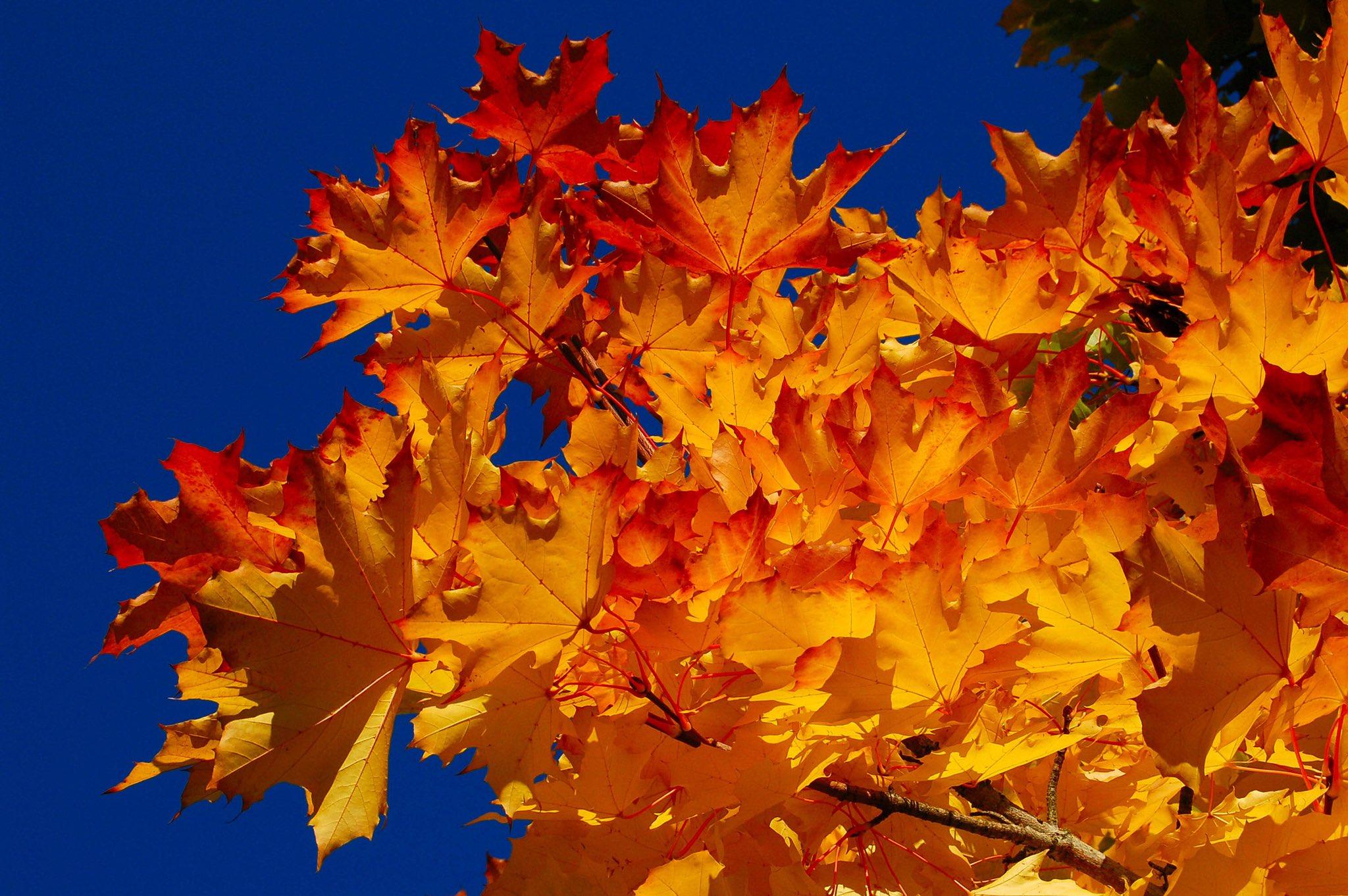 Картинки с осенней листвой, люд картинках