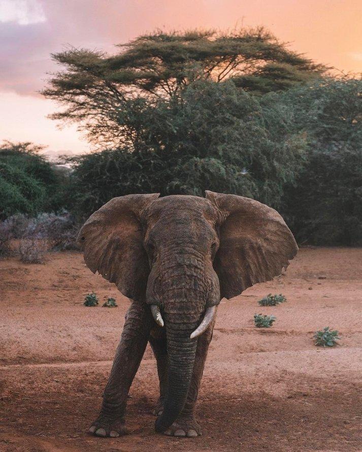 A female elephant posing for a photo
