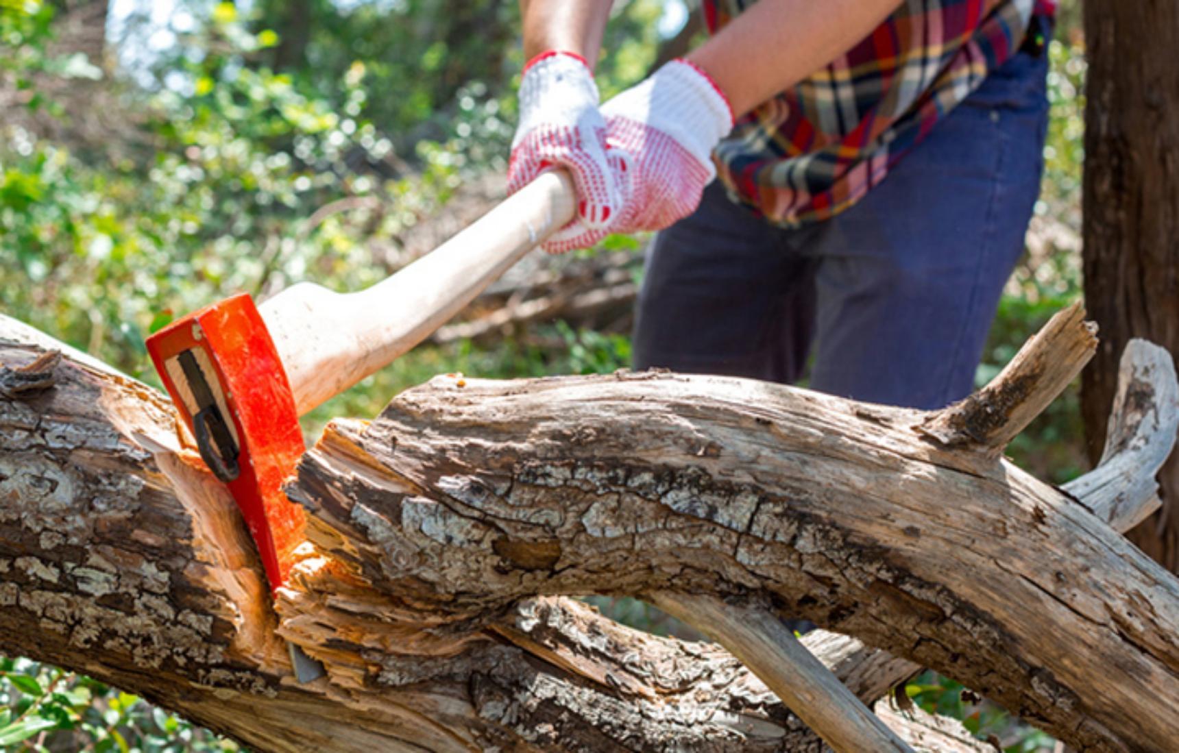 для вырубают деревья картинки глаз может выпасть