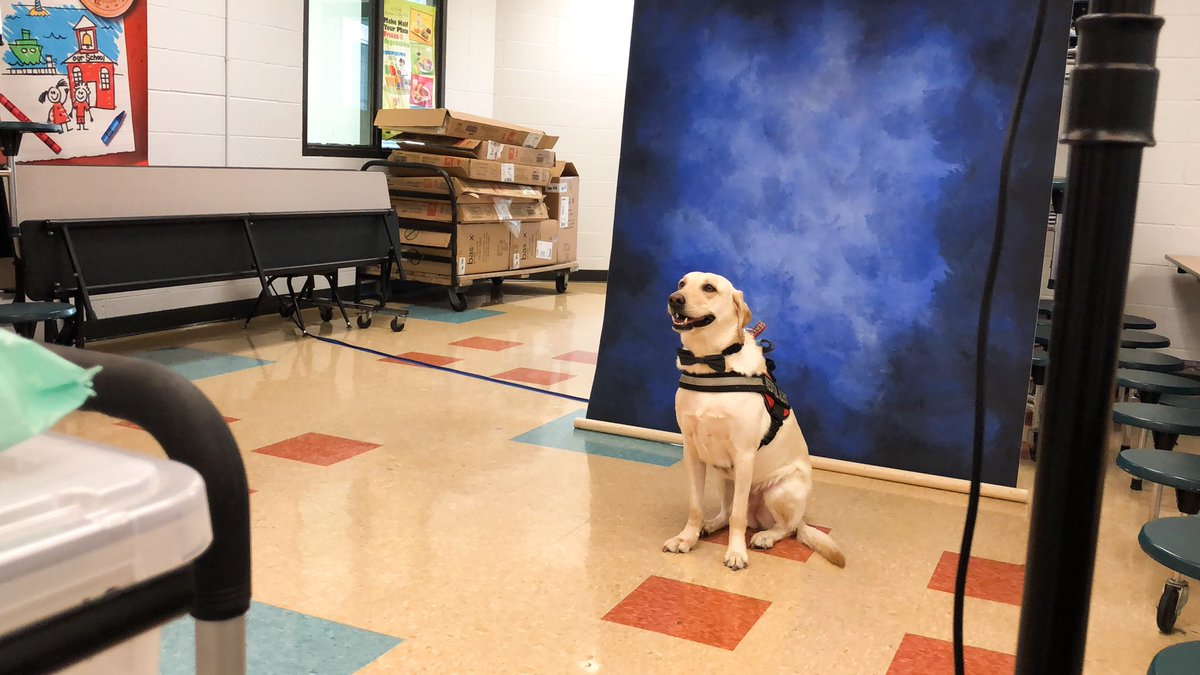 I'm a school photographer and we got to take a service dog's picture for the yearbook today 😭😭😭