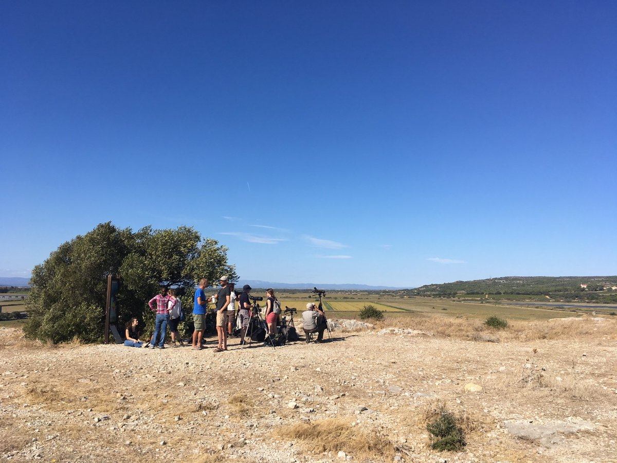Time for some movement ecology fieldwork! Watching migration at Gruissan.