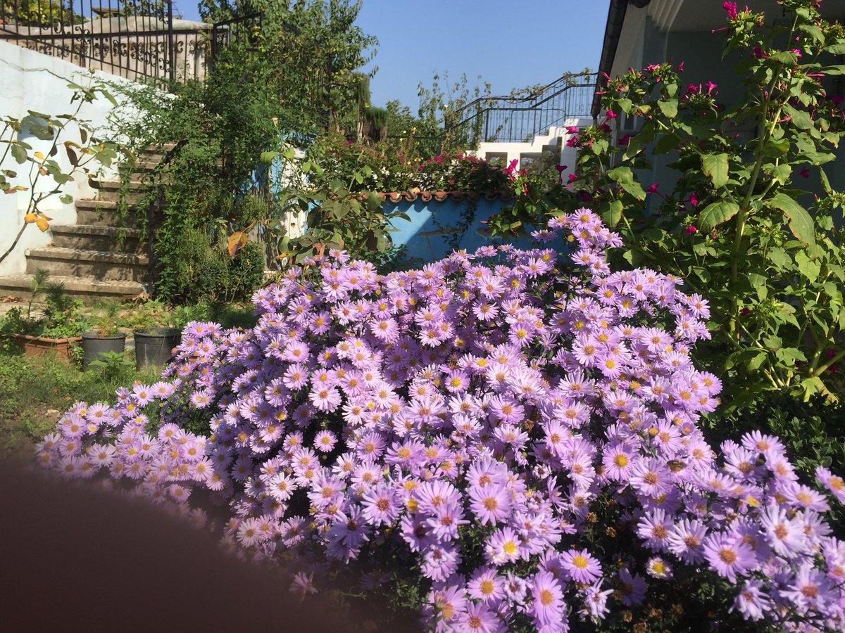 Ramazan Akkus On Twitter Bizde Bahar Bitmez Her Baharın çiçeği