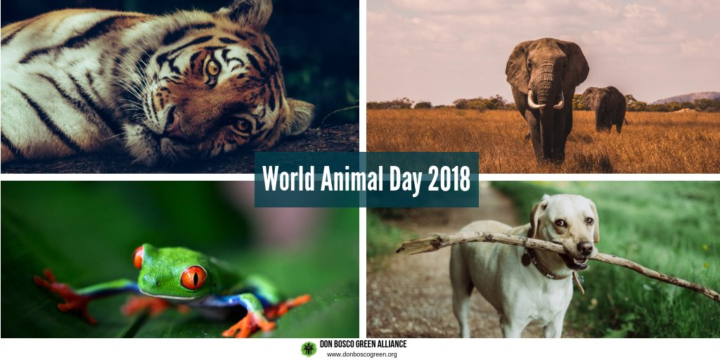 Animals Also Have The Right To Live A Life With Respect Dignity Lets Give That Them Fight For Their Rights Too Biodiversitypictwitter