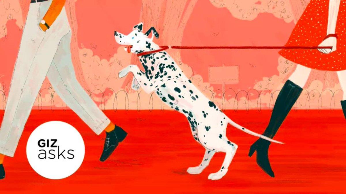 犬って飼い主のことを忘れちゃったりするの? #サイエンス #大学研究 #動物 https://t.co/u6g164fOIX