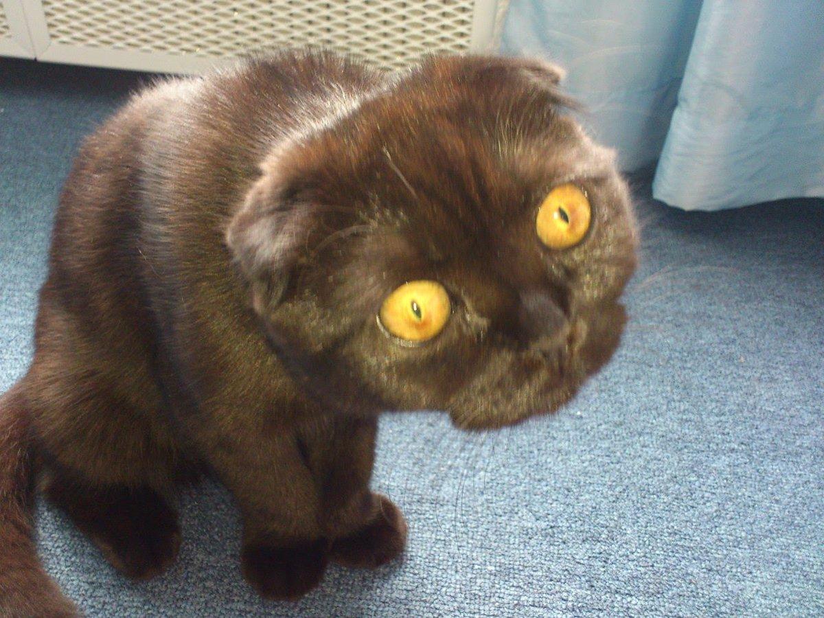 Прикольные картинки про кошек смешное до слез, про школу родителей