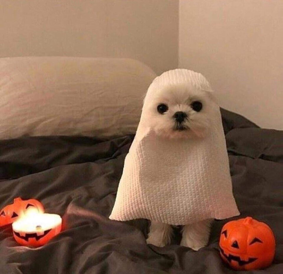 Beware, it is I...  Ghost dog.