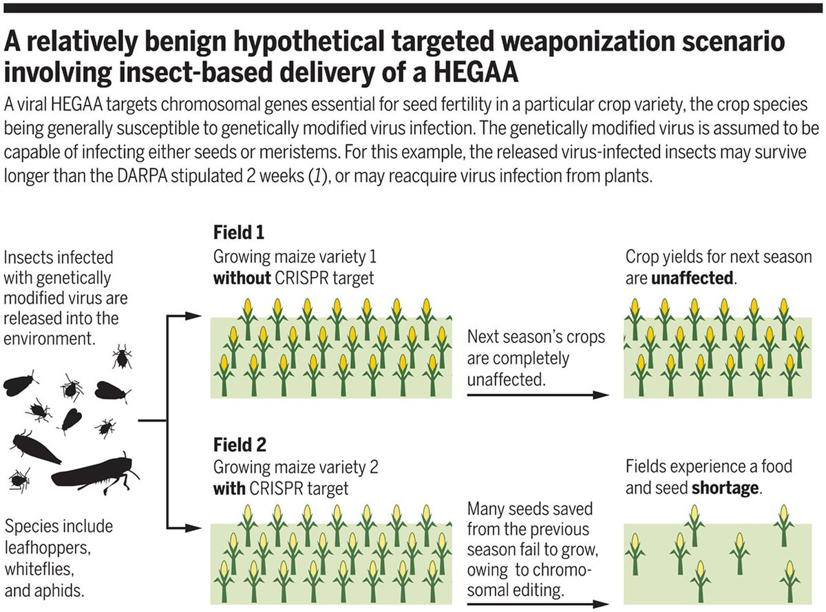 Bioweapon insects? DARPA seeks to 'defend crops' by spreading genetically modified viruses