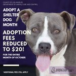 Image for the Tweet beginning: October is Adopt a Shelter