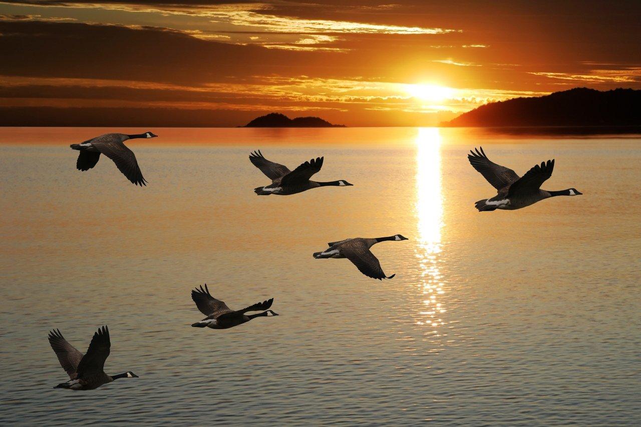 восстановлен птицы летят косяком картинка интерес остался уважение