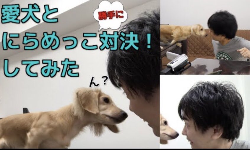 犬が笑う hashtag on Twitter
