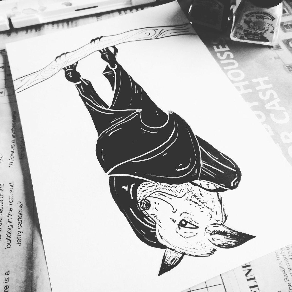 Kates Illustrations On Twitter Little Fruits Bat Fruitbat