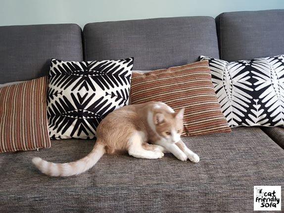 Cat Friendly Sofa