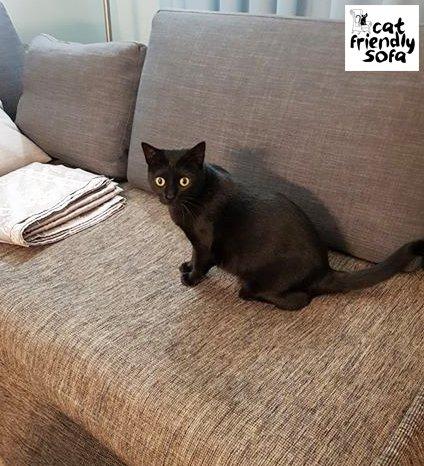 Cat Friendly Sofa (@CatFriendlySofa)   Twitter