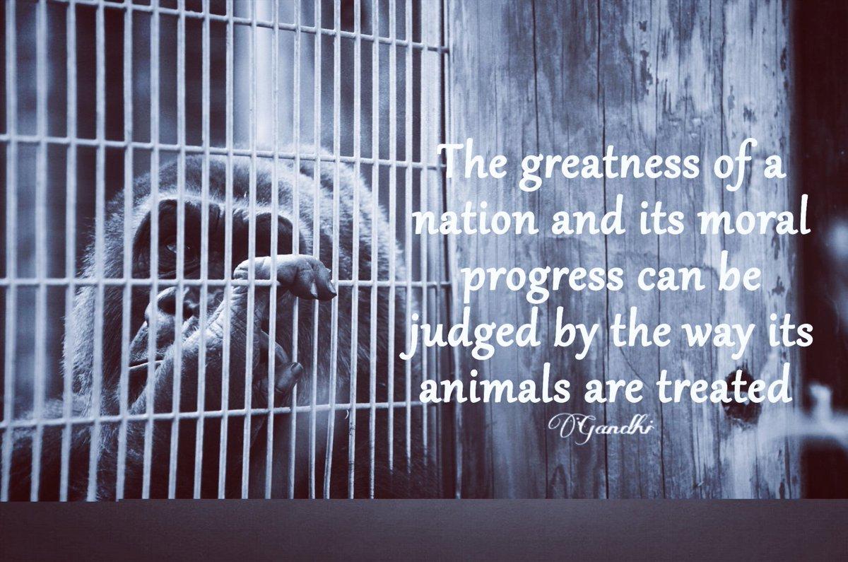 Sarah Myriam Association On Twitter Quote By Gandhi