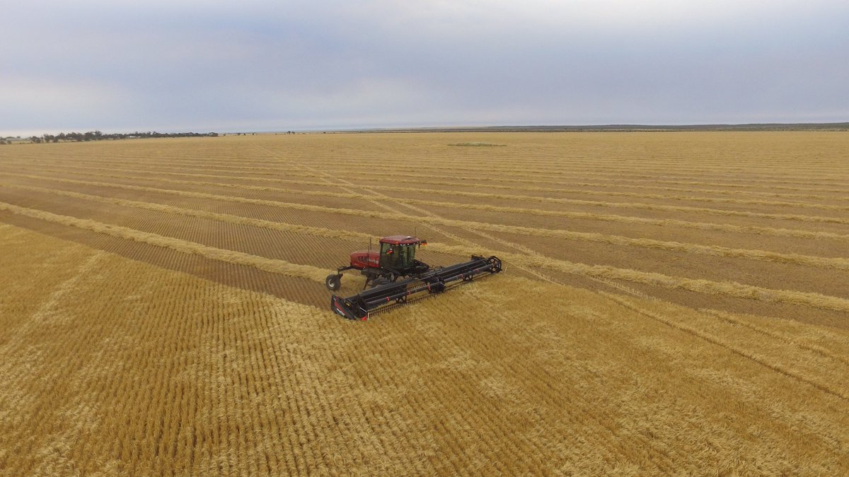 Harvest awaits,annual rainfall 150 to 300 mm,very thankful to have some crop to harvest, very short barley crops challenging to windrow,keen to make a start👍🏻🇦🇺#harvest18 #harvest2018