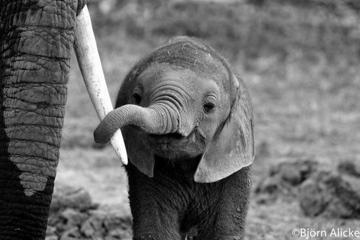 No one needs ivory except an elephant. #FuckTrophyHunting