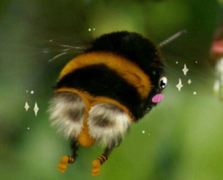 ему условиям смешное фото пчелки вызвали скорую