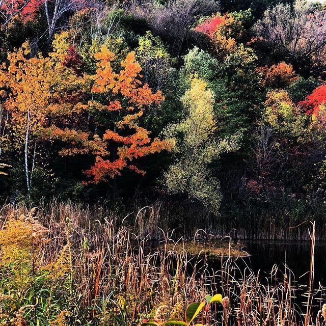 Fall photography. #toronto #fall #autumn🍁