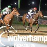 Safrani winner in @WolvesRaces congratulating to SHEIKH ABDULLAH ALMALEK ALSABAH #alaren_racing traind by @omeararacing & raiden @muskatsturm good luck all👏🏻💚🇰🇼