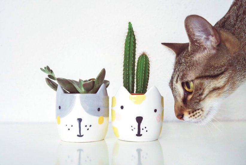 There are some #houseplants that can be unsafe for your cat or dog. #homeowner   http:// cpix.me/a/57570651  &nbsp;  <br>http://pic.twitter.com/VhFrNS3eiX