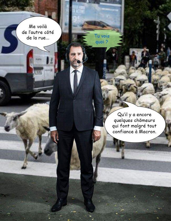 #RemaniementMinisteriel#JePoseÇaLàSéquence cri de laine.  - FestivalFocus