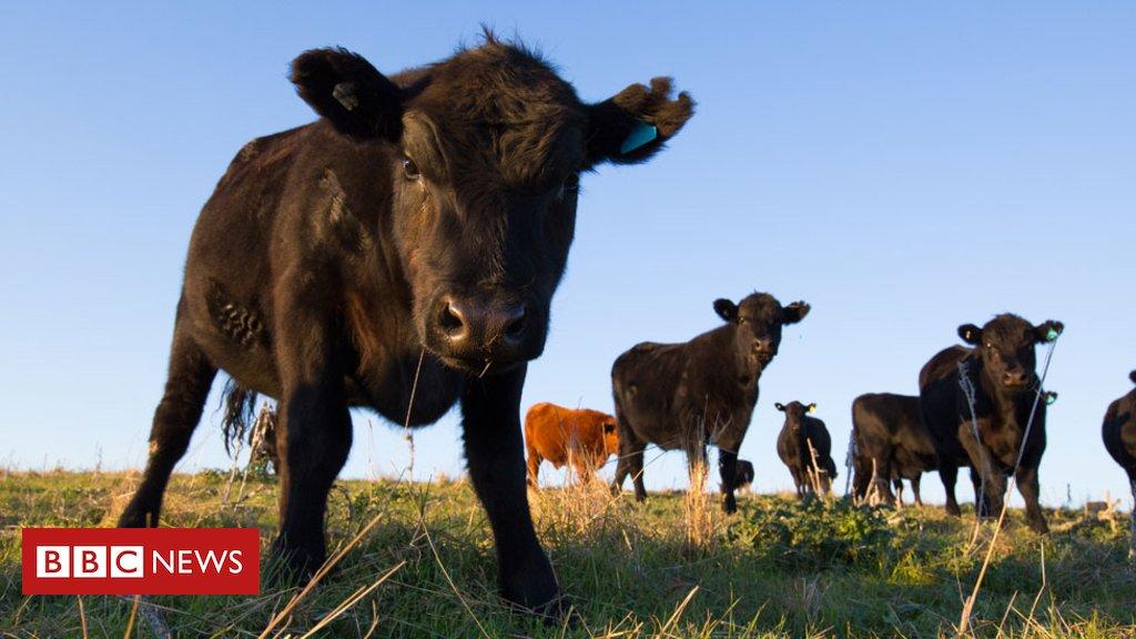 O que se sabe sobre o caso de doença da vaca louca registrado na Escócia https://t.co/TDeEvkPKlw #saúde