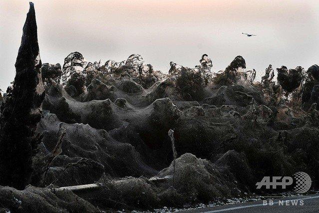 【悪夢の光景】クモが大量発生、湖畔の全長1kmを巣で覆う ギリシャ https://t.co/hE4gLf91G5  数十万匹が発生し、道路沿いの茂みやガードレールなどが巣で覆われた。気温の低下と降雨の増加により消えていく見通し。