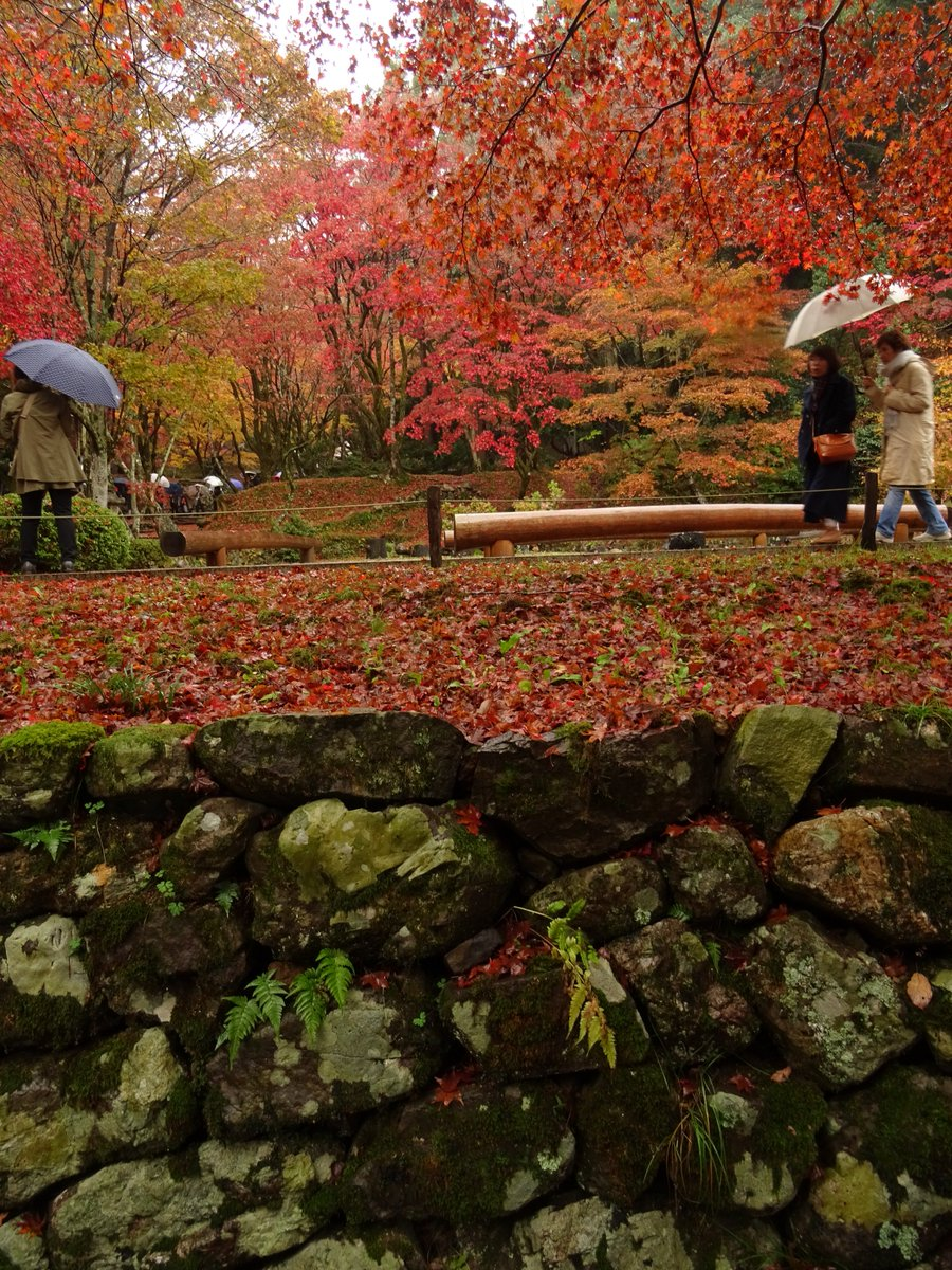 """test ツイッターメディア - 【<strong>鶏足寺</strong>(滋賀)】 #紅葉 #滋賀 #庭園 #日本庭園好きな人RT #写真好きな人と繋がりたい #写真撮ってる人と繋がりたい #ファインダー越しの私の世界 <a rel=""""noopener"""" target=""""_blank"""" href=""""https://t.co/IYNYVRMkTu'"""" title=""""Twitter / ?"""" class=""""blogcard-wrap external-blogcard-wrap a-wrap cf""""><div class=""""blogcard external-blogcard eb-left cf""""><div class=""""blogcard-label external-blogcard-label""""><span class=""""fa""""></span></div><figure class=""""blogcard-thumbnail external-blogcard-thumbnail""""><img data-src=""""https://s0.wordpress.com/mshots/v1/https%3A%2F%2Ft.co%2FIYNYVRMkTu%27?w=160&h=90"""" alt="""""""" class=""""blogcard-thumb-image external-blogcard-thumb-image lozad lozad-img"""" loading=""""lazy"""" width=""""160"""" height=""""90""""/><noscript><img src=""""https://s0.wordpress.com/mshots/v1/https%3A%2F%2Ft.co%2FIYNYVRMkTu%27?w=160&h=90"""" alt="""""""" class=""""blogcard-thumb-image external-blogcard-thumb-image"""" width=""""160"""" height=""""90""""/></noscript></figure><div class=""""blogcard-content external-blogcard-content""""><div class=""""blogcard-title external-blogcard-title"""">Twitter / ?</div><div class=""""blogcard-snippet external-blogcard-snippet""""></div></div><div class=""""blogcard-footer external-blogcard-footer cf""""><div class=""""blogcard-site external-blogcard-site""""><div class=""""blogcard-favicon external-blogcard-favicon""""><img data-src=""""https://www.google.com/s2/favicons?domain=t.co"""" alt="""""""" class=""""blogcard-favicon-image external-blogcard-favicon-image lozad lozad-img"""" loading=""""lazy"""" width=""""16"""" height=""""16""""/><noscript><img src=""""https://www.google.com/s2/favicons?domain=t.co"""" alt="""""""" class=""""blogcard-favicon-image external-blogcard-favicon-image"""" width=""""16"""" height=""""16""""/></noscript></div><div class=""""blogcard-domain external-blogcard-domain"""">t.co</div></div></div></div></a> /></a></div></div></div></div></div></div></div><footer class=""""article-footer entry-footer""""><div class=""""entry-categories-tags ctdt-one-row""""><div class=""""entry-categories""""><a class=""""cat-link cat-link-35"""" href=""""https://www.kouyou-spot.com/category/kansai/shiga/""""><span class=""""fa fa-folder"""" aria-hidden=""""true""""></s"""