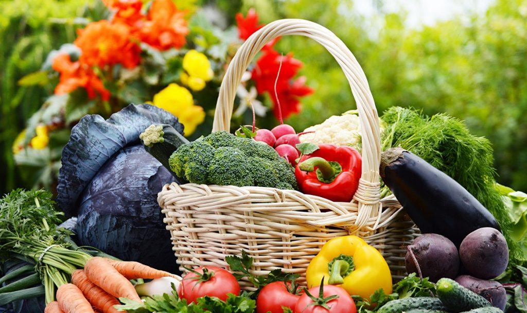 Картинки овощи фрукты растения