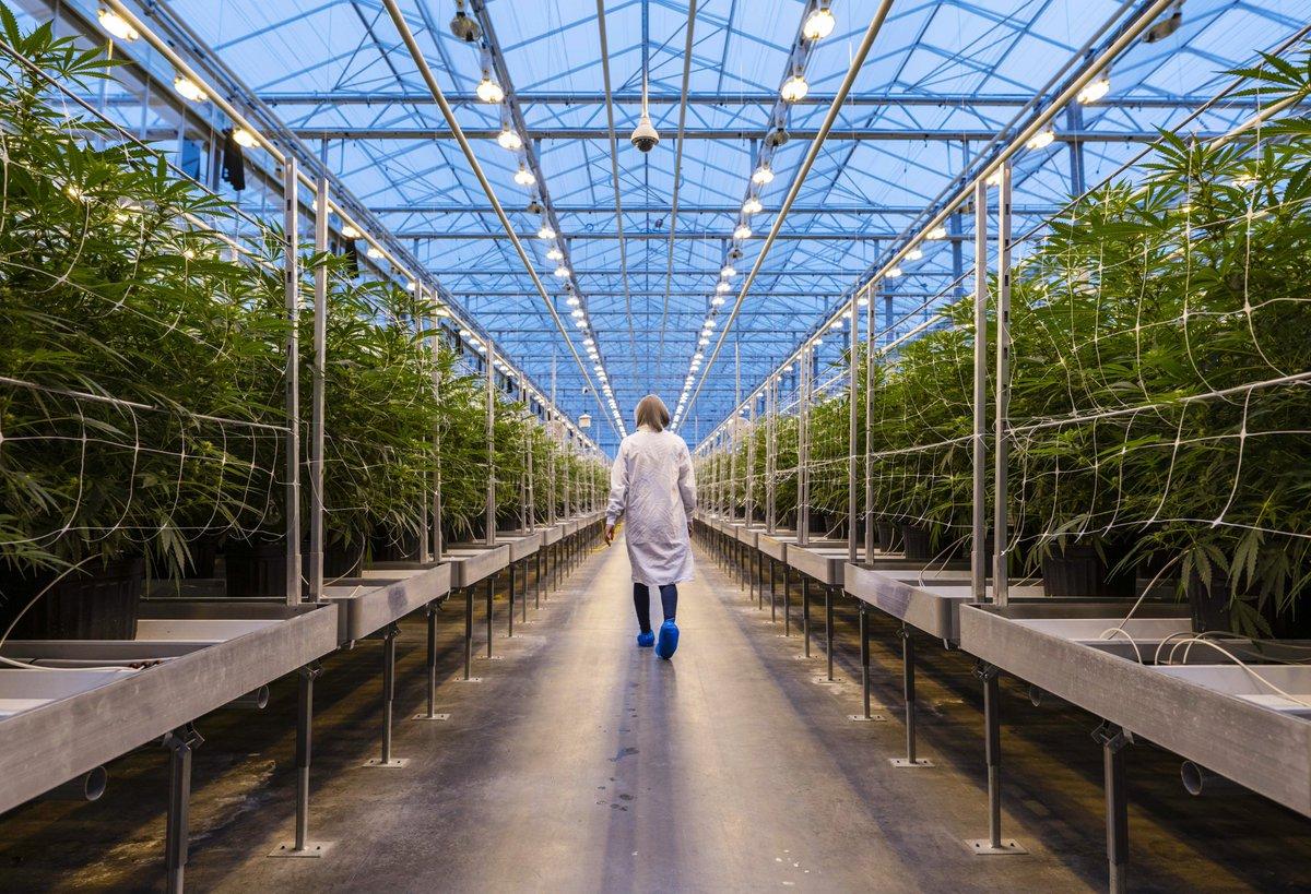 大麻栽培の需要は「天文学的」、娯楽使用合法化のカナダで用地急拡大 https://t.co/Mq7iYcqAzK