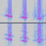 "Image for the Tweet beginning: ""By listening to recordings, these"