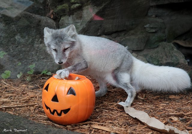 Dont miss HallZOOween presented by Frischs Big Boy every Saturday and Sunday from 12-5pm in October. Treat stations, magic shows, special animal enrichment, and more makes this event fun for the whole family! ow.ly/GKsg30mgIMN