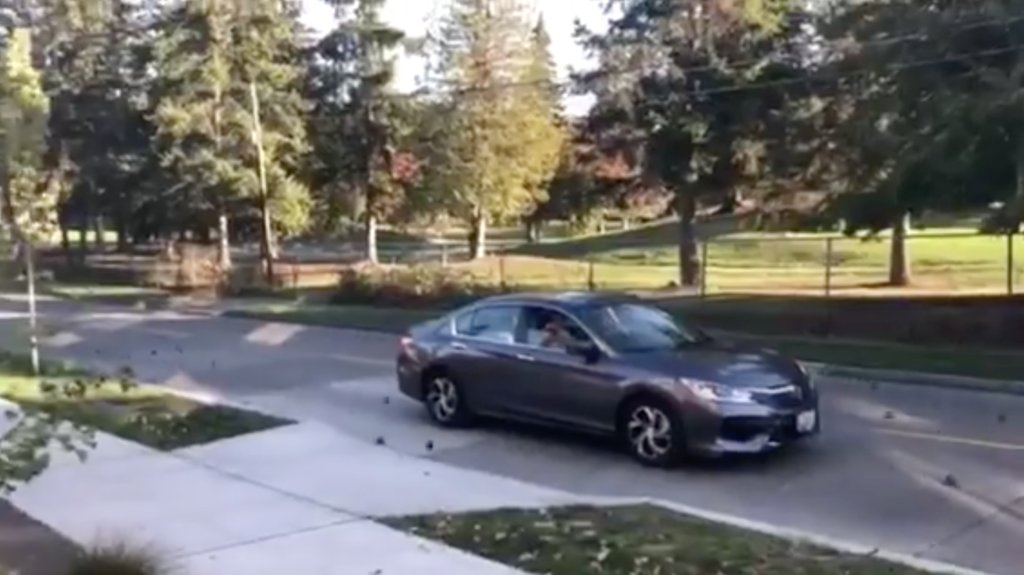 Video shows 2-pound metal balls pour out of truck, damaging cars https://t.co/bHiPkeBQhv