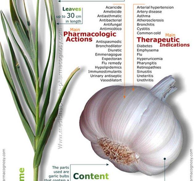 RT Properties Of Garlic Infographic ➡ https://t.co/LSc4vkDywz https://t.co/xoLImjKooA #health #well