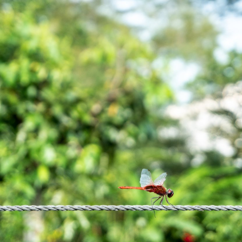 On our ride out this week, the Mobike Team saw a dragonfly resting majestically on a rope. At that instance, we knew we had to take a picture of this beautiful creature! 📸 https://t.co/G03O4Xf5Ly