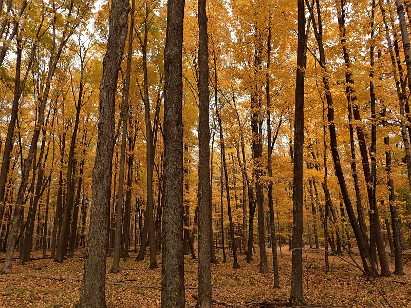 Beautiful fall day walking through the forest in Marathon Co. 🍁🍁🍁 Thanks for sharing Kathy!! #NBC15 #Fall #Colors